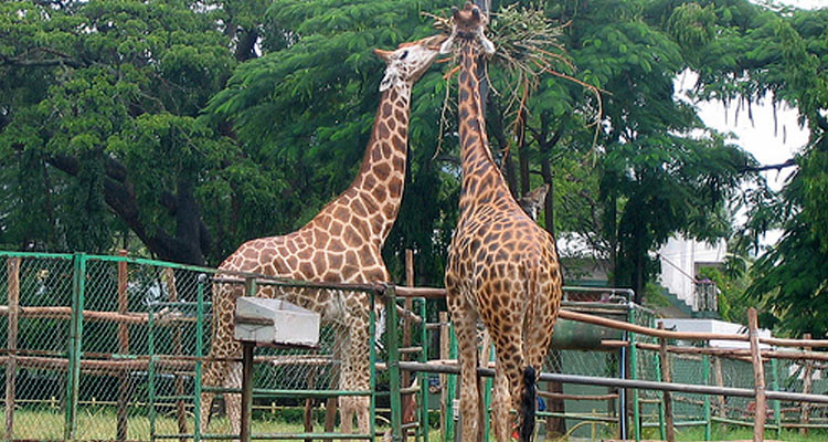 Alipore zoological park will make your kids a nature enthusiasts