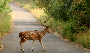 sanjay gandhi national park mumbai is an oasis in the city for bird watching, hikes and animal sighting